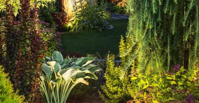 Landscape lighting tampa fl chop chop landscaping tampa fl landscaper aloadofball Gallery